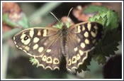 subimg_wildlife2